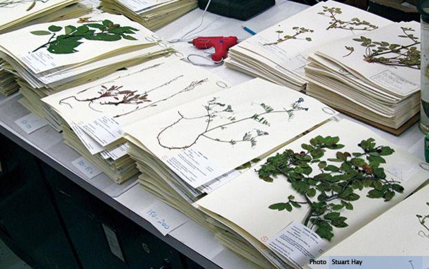 Vue d'ensemble d'une infime partie de l'Herbier Marie-Victorin - © Stuart Hay