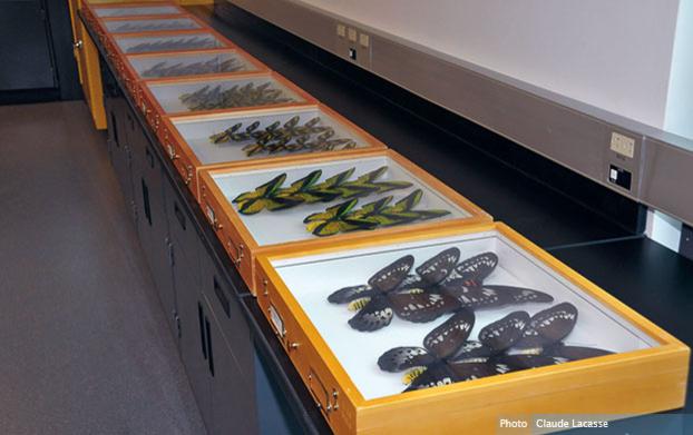 Entreposage des papillons au Centre sur la biodiversité faisant partie de la collection Ouellet-Robert : un témoin essentiel de la biodiversité de la faune entomologique du Québec et d'ailleurs - © Centre sur a biodiversité